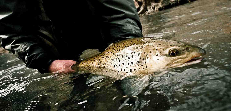 Comment choisir la longueur de sa canne à pêche ?