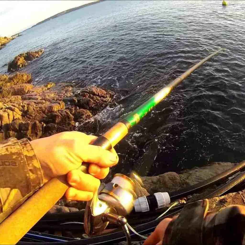 Quel matériel pour la pêche au carnassier ?