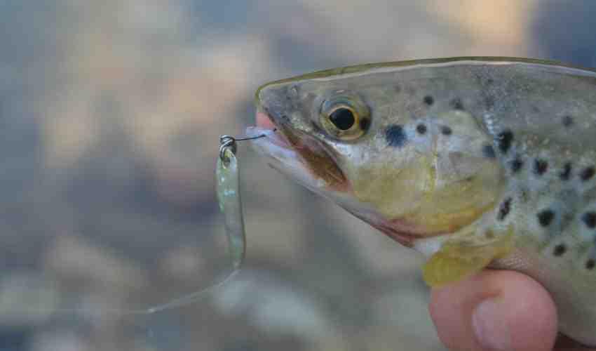 Quelle nylon pour la pêche au leurre ?