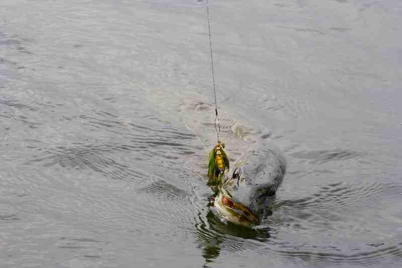 Comment choisir la taille de son fil de pêche ?