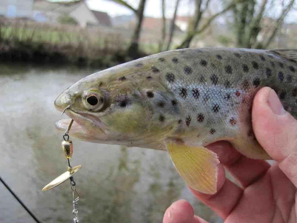 Quel diamètre de fil pour pêcher à la cuillère ?