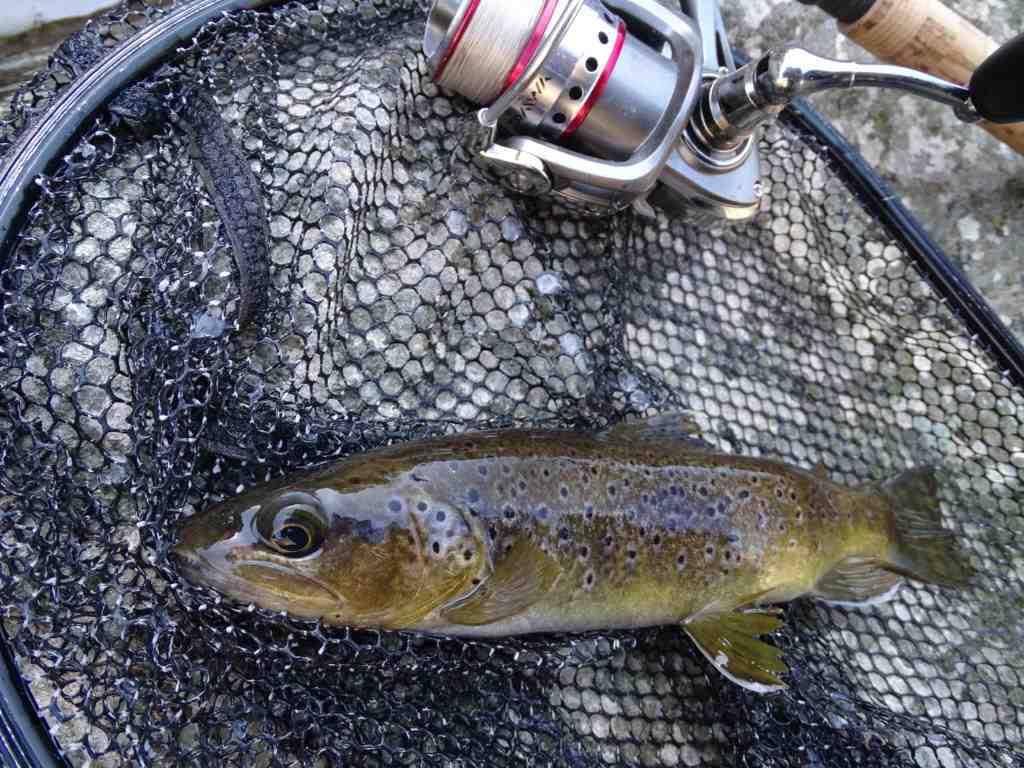Quel diamètre de fil pour pêcher la truite à la cuillère ?