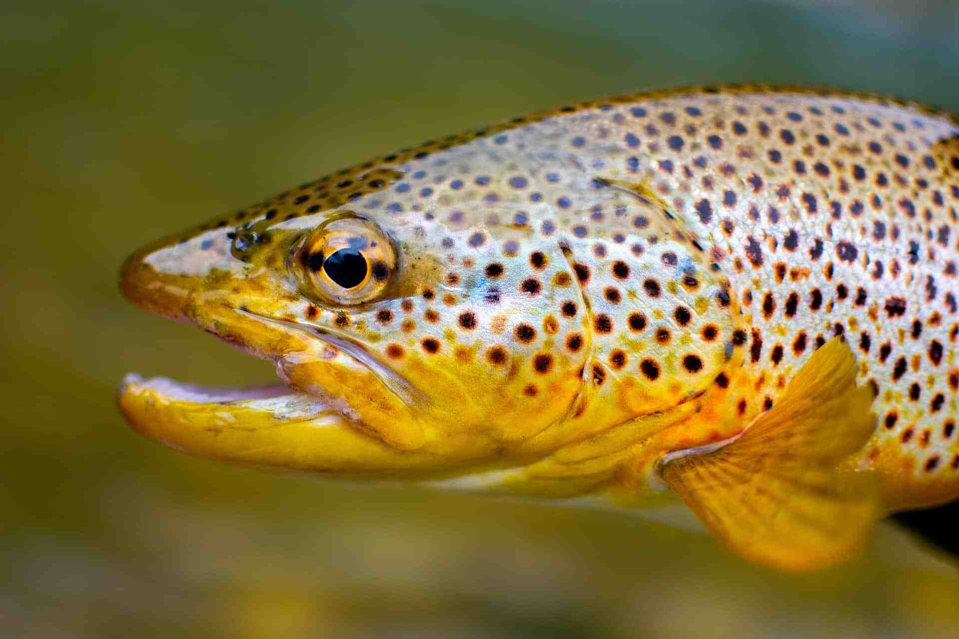 Quel fil pour la pêche au leurre ?
