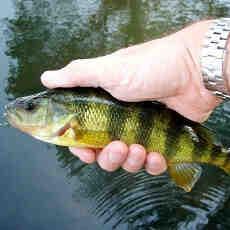 Comment bien debuter la pêche au leurre ?