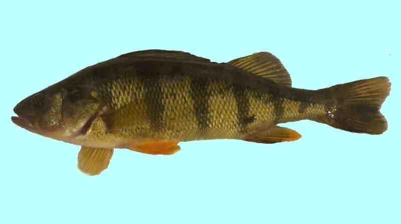 Comment debuter la pêche au carnassier ?