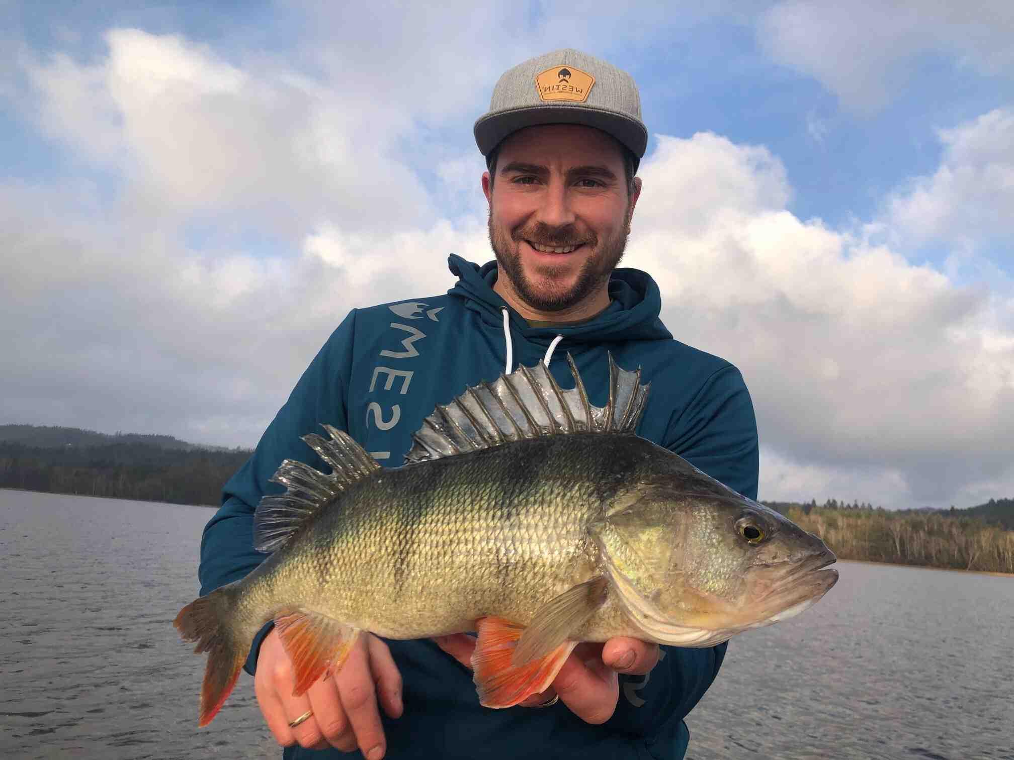 Comment pêcher la perche commune ?