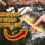 Comment pêcher la perche en Etang ?