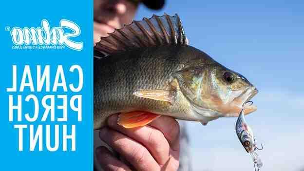 Comment pêcher le sandre au twist ?