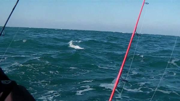 sondeur peche en mer